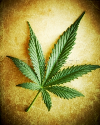 180760_stock-photo-cannabis-leaf-on-grunge-background-shallow-dof.jpg