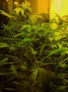 742772_weed.jpg