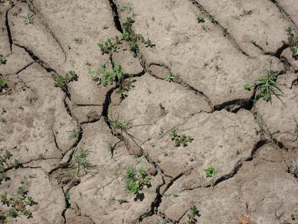 drought-1183623.jpg