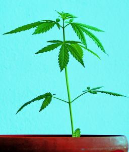 laughing-plant-769152-m.jpg