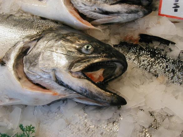 salmon-on-ice-1549374.jpg