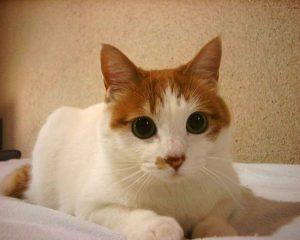 cat-1404368-300x240