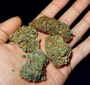 Los Angeles marijuana employment attorney